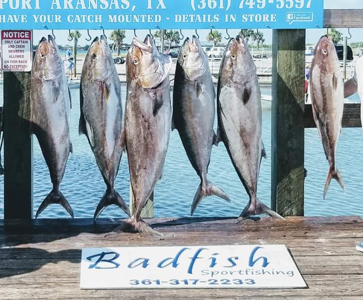 Fishing Reports/Posts - Port Aransas Offshore Fishing Charters